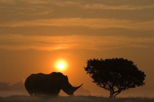rhino-592x395