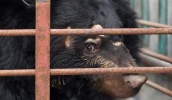 What-is-bear-bile-farming-banner-banner