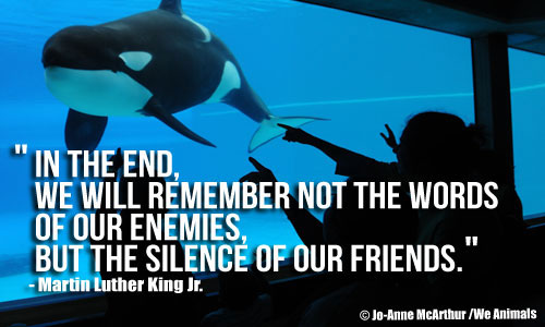 FINAL2orca_2D00_silence_2D00_friends1