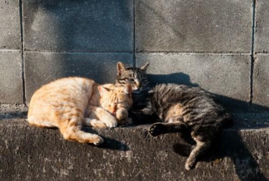stray-cats-592x399