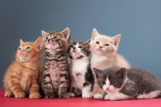 group-of-kittens