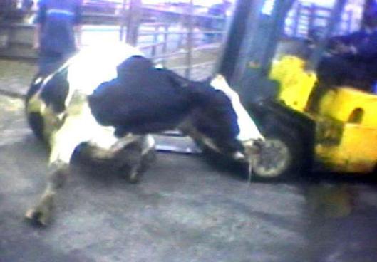 la-ed-animal-cruelty-ab343-20130327-001