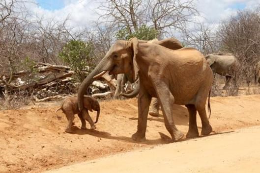 elephant and baby 3