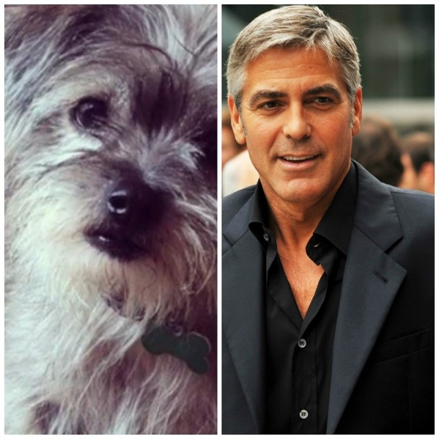 George Clooney Adopts a Disabled Pup For His Parents