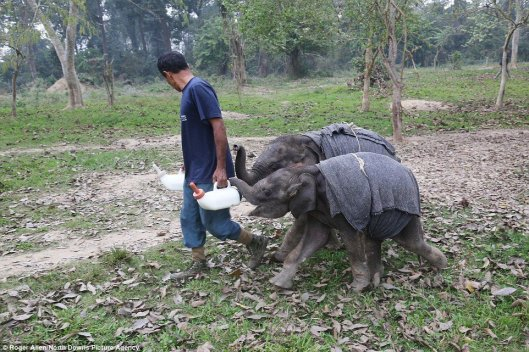 Awesome Vet Comes Up With Genius Idea to Help Traumatized, Orphaned Elephants (PHOTOS)
